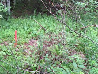 Photo 3: 22 3539 7 Highway in Lake Echo: 31-Lawrencetown, Lake Echo, Porters Lake Vacant Land for sale (Halifax-Dartmouth)  : MLS®# 202119499
