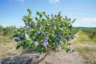Photo 24: 16397 40 Avenue in Surrey: Serpentine Land for sale (Cloverdale)  : MLS®# R2586709
