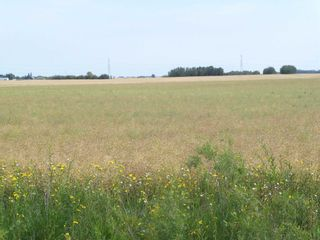 Photo 1: TWP 551 RR 234: Rural Sturgeon County Rural Land/Vacant Lot for sale : MLS®# E4245373