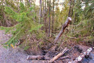 Photo 7: Lot 41 Klondike Trail: Anglemont Vacant Land for sale (North Shuswap)  : MLS®# 10228883