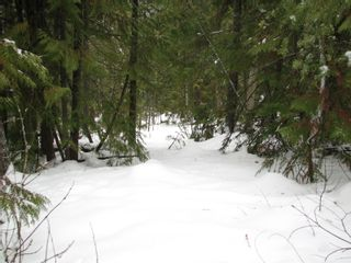 Photo 13: Lot 1 Trans Can Hwy: Blind Bay Land Only for sale (Shuswap)  : MLS®# 10148323