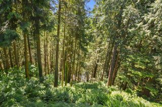 Photo 19: 14244 SILVER VALLEY Road in Maple Ridge: Silver Valley House for sale : MLS®# R2594780