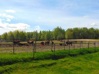 Photo 28: 13934 PACKHAM FRONTAGE Road: Charlie Lake Agri-Business for sale (Fort St. John (Zone 60))  : MLS®# C8039465