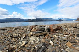 Photo 8: 1706 Blind Bay Road: Blind Bay Vacant Land for sale (South Shuswap)  : MLS®# 10185440