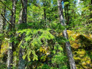 Photo 18: Lot 48 FLINT Road: Keats Island Land for sale (Sunshine Coast)  : MLS®# R2460854
