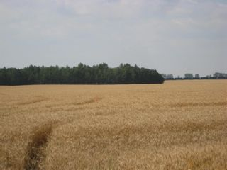 Photo 11: SE 20 30 1 W5 Highway 2A: Carstairs Residential Land for sale : MLS®# A1067588