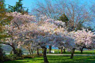 """Photo 24: 3 3036 W 4TH Avenue in Vancouver: Kitsilano Condo for sale in """"SANTA BARBARA"""" (Vancouver West)  : MLS®# R2575683"""