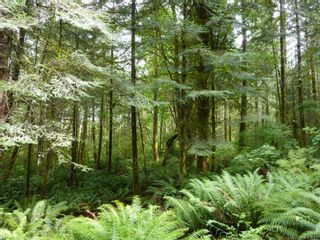 Photo 12: SL 16 950 HERIOT BAY Rd in : Isl Quadra Island Land for sale (Islands)  : MLS®# 853701