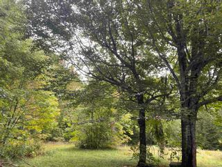 Photo 4: 1005 Heathbell Road in Scotch Hill: 108-Rural Pictou County Vacant Land for sale (Northern Region)  : MLS®# 202124669