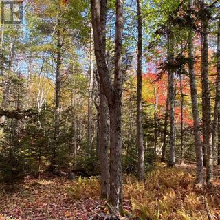 Photo 5: Acreage Middle New Cornwall in Middle New Cornwall: Vacant Land for sale : MLS®# 202125307