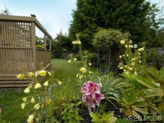 Photo 18: 4397 Columbia Dr in VICTORIA: SE Gordon Head House for sale (Saanich East)  : MLS®# 513130