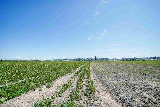 Photo 15: 16397 40 Avenue in Surrey: Serpentine Land for sale (Cloverdale)  : MLS®# R2586709