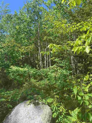 Photo 3: Lot 1 North River Road in Aylesford Lake: 404-Kings County Vacant Land for sale (Annapolis Valley)  : MLS®# 202011590