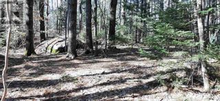 Photo 6: Lot Tupper Street in Milton: Vacant Land for sale : MLS®# 202109601