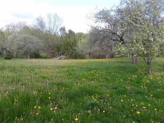 Photo 5: 11 Palmer Road in Harmony: 404-Kings County Vacant Land for sale (Annapolis Valley)  : MLS®# 202006110