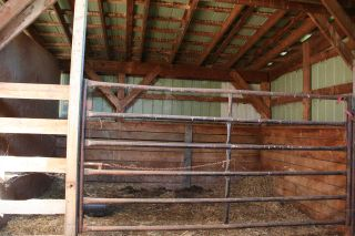 Photo 12: RR 220 And HWY 18: Rural Thorhild County House for sale : MLS®# E4227750