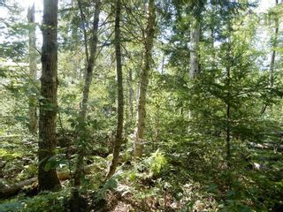Photo 1: Watt Road in Hedgeville: 108-Rural Pictou County Vacant Land for sale (Northern Region)  : MLS®# 202122216