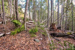 Photo 13: Lot 41 Klondike Trail: Anglemont Vacant Land for sale (North Shuswap)  : MLS®# 10228883