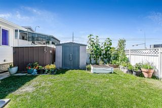 Photo 6: 139 Appletree Close SE in Calgary: Applewood Park Detached for sale : MLS®# A1022936