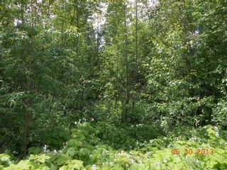 Photo 4: 247 Aspen Road in Anglemont: Land Only for sale : MLS®# 10066280