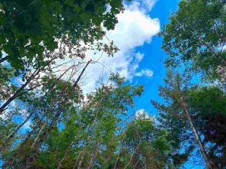 Photo 12: 740 EAGLES REST Lane: Galiano Island Land for sale (Islands-Van. & Gulf)  : MLS®# R2586632