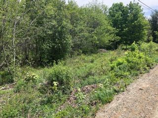 Photo 6: Lot Morganville Road in Morganville: 401-Digby County Vacant Land for sale (Annapolis Valley)  : MLS®# 202105239