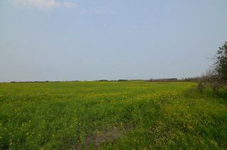 Photo 5: Range Rd 181 & Township Rd 559: Rural Lamont County Rural Land/Vacant Lot for sale : MLS®# E4258172