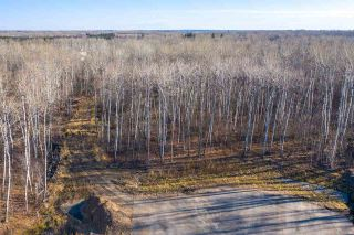 Photo 5: 40 50367 RR 222: Rural Leduc County Rural Land/Vacant Lot for sale : MLS®# E4220000