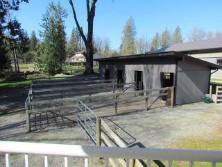 Photo 14: 25170 4 AV in Langley: Otter District House for sale : MLS®# F1441032