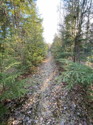 Photo 24: Saunders Road in Durham: 108-Rural Pictou County Vacant Land for sale (Northern Region)  : MLS®# 202108674