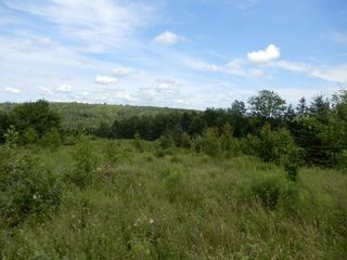 Photo 5: 299 New Lairg Road in New Lairg: 108-Rural Pictou County Vacant Land for sale (Northern Region)  : MLS®# 202117815