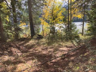 Photo 18: DL3592 & DL4084 1020 Forest Service Road in Seymour Arm: syemour arm Land Only for sale (shuswap)  : MLS®# 10241424