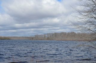 Photo 9: 195 Campbell Beach Road in Kawartha Lakes: Rural Carden House (Bungalow) for sale : MLS®# X4741548