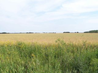 Photo 4: TWP 551 RR 234: Rural Sturgeon County Rural Land/Vacant Lot for sale : MLS®# E4245373