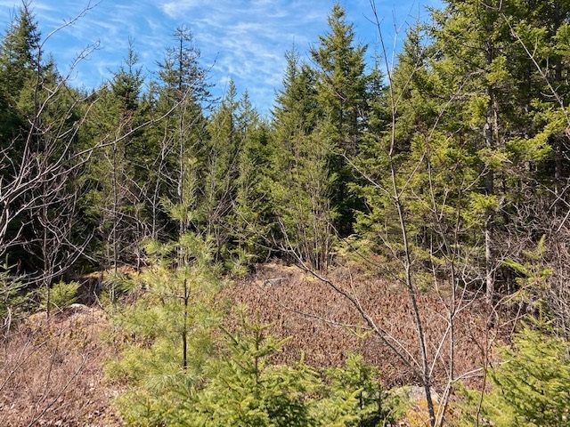 Main Photo: 65 Eaglet Lane in Musquodoboit Harbour: 35-Halifax County East Vacant Land for sale (Halifax-Dartmouth)  : MLS®# 202109854