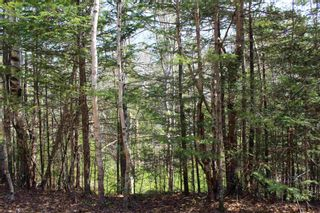 Photo 4: 5 Big Rock Lane in East Chester: 405-Lunenburg County Vacant Land for sale (South Shore)  : MLS®# 202109367