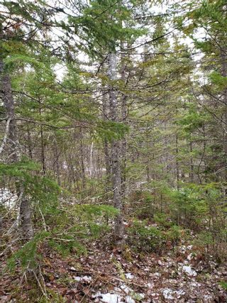 Photo 6: Lots Melrose Country Harbour Road in Country Harbour: 303-Guysborough County Vacant Land for sale (Highland Region)  : MLS®# 202102147