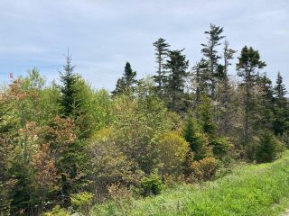 Photo 19: Lot Mushaboom Road in Mushaboom: 35-Halifax County East Vacant Land for sale (Halifax-Dartmouth)  : MLS®# 202114485
