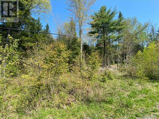 Photo 11: 5264 Rte 770 in Rollingdam: Vacant Land for sale : MLS®# NB058269
