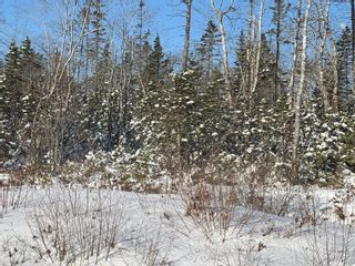 Photo 2: Acreage Highway 103 in Beaver Dam: 407-Shelburne County Vacant Land for sale (South Shore)  : MLS®# 202102356