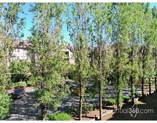 """Photo 10: 201 8451 WESTMINSTER Highway in Richmond: Brighouse Condo for sale in """"Arboretum"""" : MLS®# V667220"""