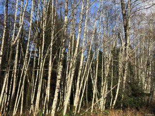 Photo 3: LT 13 PRENDERGAST ROAD in COURTENAY: CV Courtenay West Land for sale (Comox Valley)  : MLS®# 779740