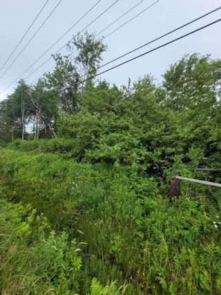 Photo 8: Lot NO 217 Highway in Roxville: 401-Digby County Vacant Land for sale (Annapolis Valley)  : MLS®# 202115919