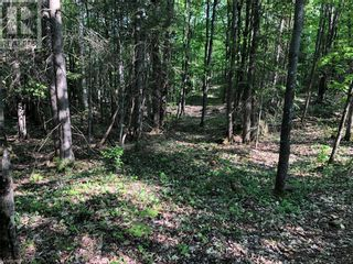 Photo 13: N/A RANEY Road E in Sundridge: Vacant Land for sale : MLS®# 40129602