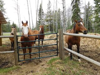 Photo 36: 84078 Highway 591: Rural Clearwater County Detached for sale : MLS®# A1111743