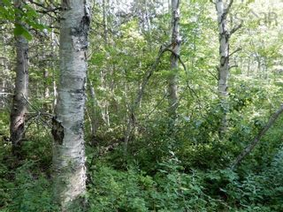 Photo 10: Salem Road in Greenhill: 108-Rural Pictou County Vacant Land for sale (Northern Region)  : MLS®# 202121181