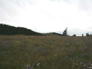 Photo 23: 1328 AC SCOTT ROAD in : Valleyview Lots/Acreage for sale (Kamloops)  : MLS®# 135387