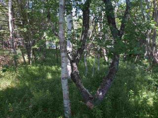 Photo 7: Lots Shore Road in Churchover: 407-Shelburne County Vacant Land for sale (South Shore)  : MLS®# 202011924