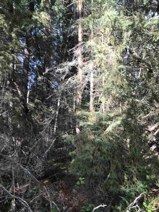 Photo 22: Pinebrook Block 1 Lot 2: Rural Thorhild County Rural Land/Vacant Lot for sale : MLS®# E4171871