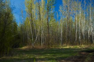 Photo 14: RR 21 TWP 565A Lake Nakamun: Rural Lac Ste. Anne County Rural Land/Vacant Lot for sale : MLS®# E4246330